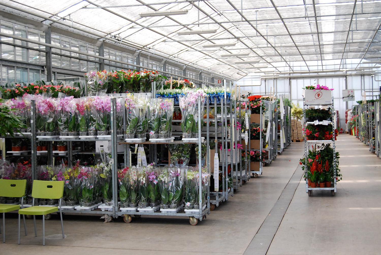 serra con piante da ingrosso