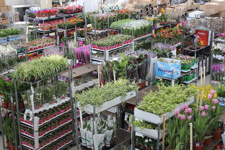 serra con piante fiorite