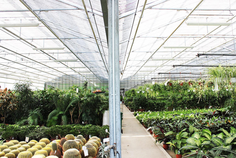 serra con piante verdi