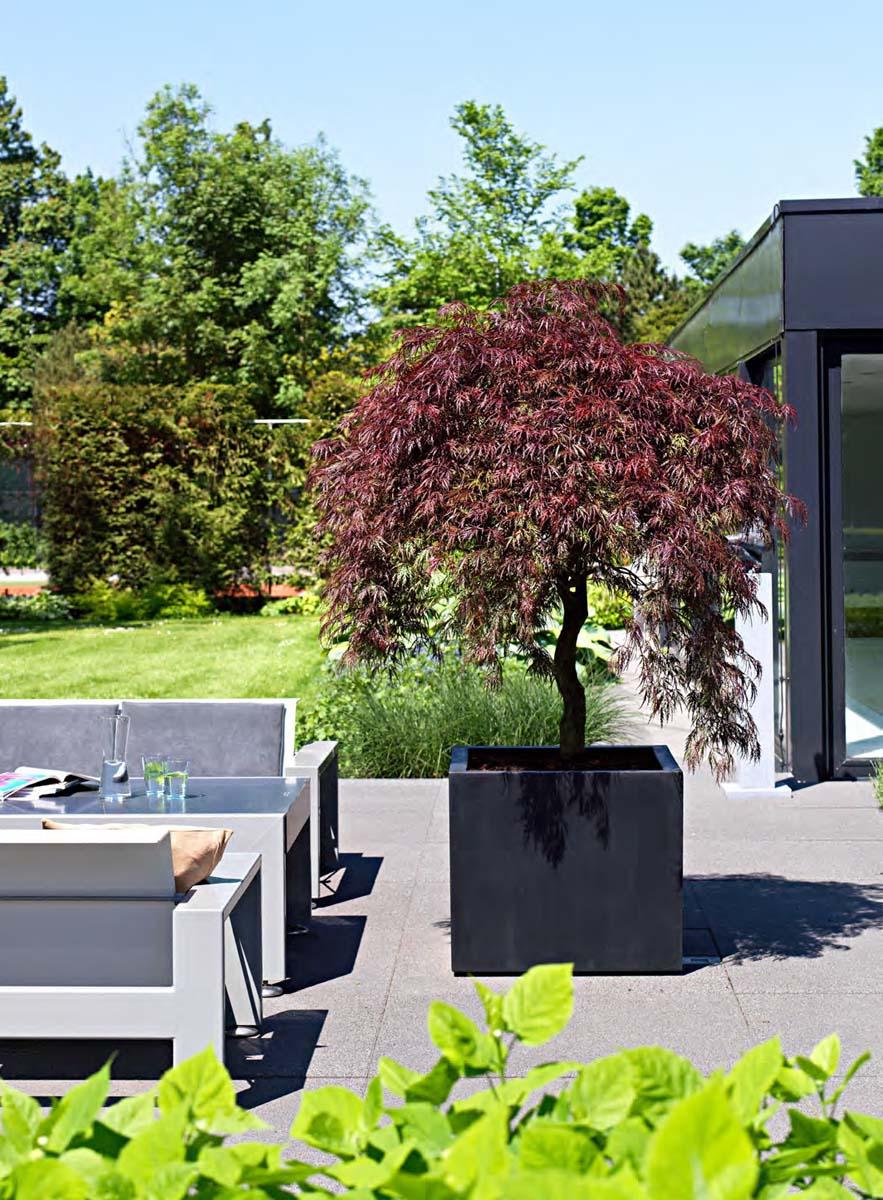 Vasi Per Piante Da Terrazzo piante da esterno verdi, ingrosso piante ornamentali