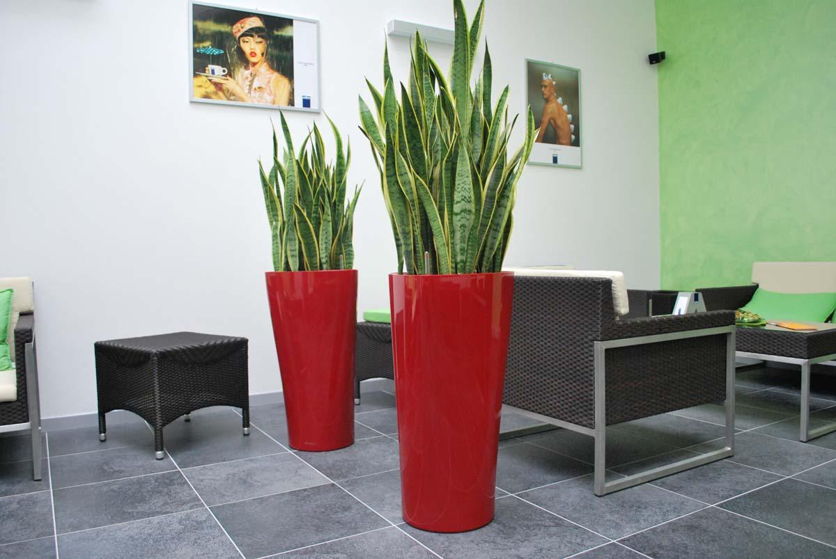 Piante Da Appartamento Design.Composizione Piante Da Interno Palestra Officina Verde Design
