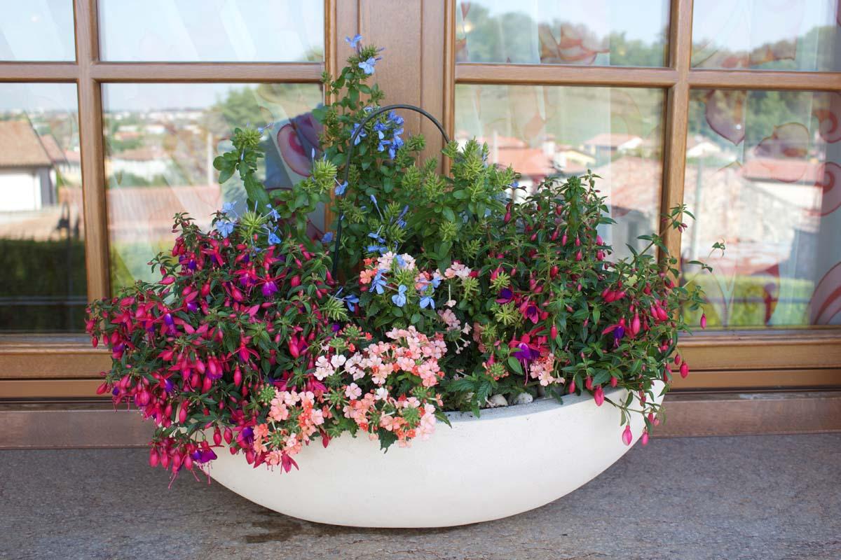 composizione piante primaverili