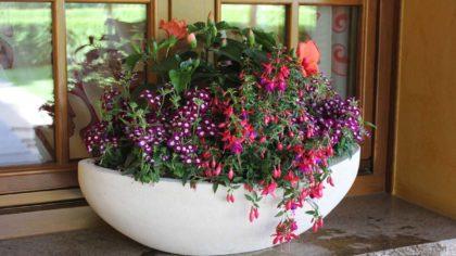 composizione di piante primaverili