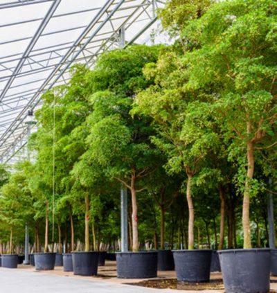 Piante verdi esemplari