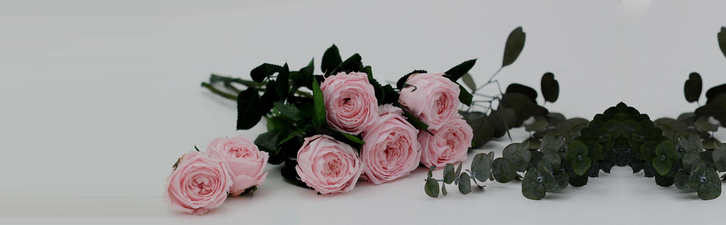 7 rose rosa