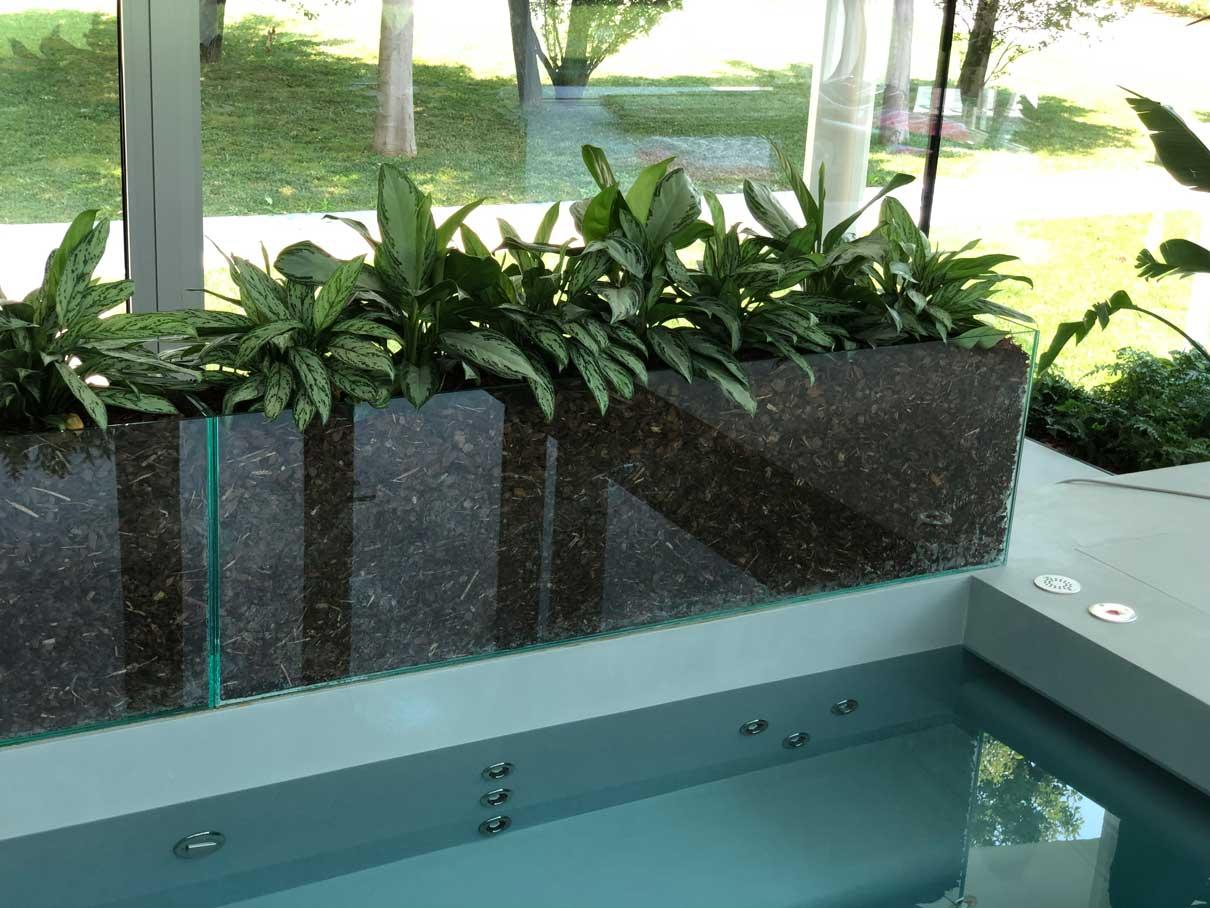composizione piante verdi vicino a piscina