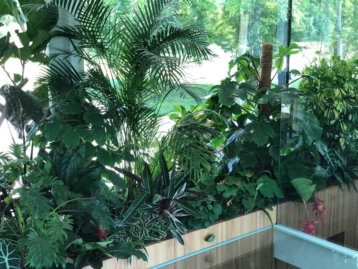 composizioni piante verdi