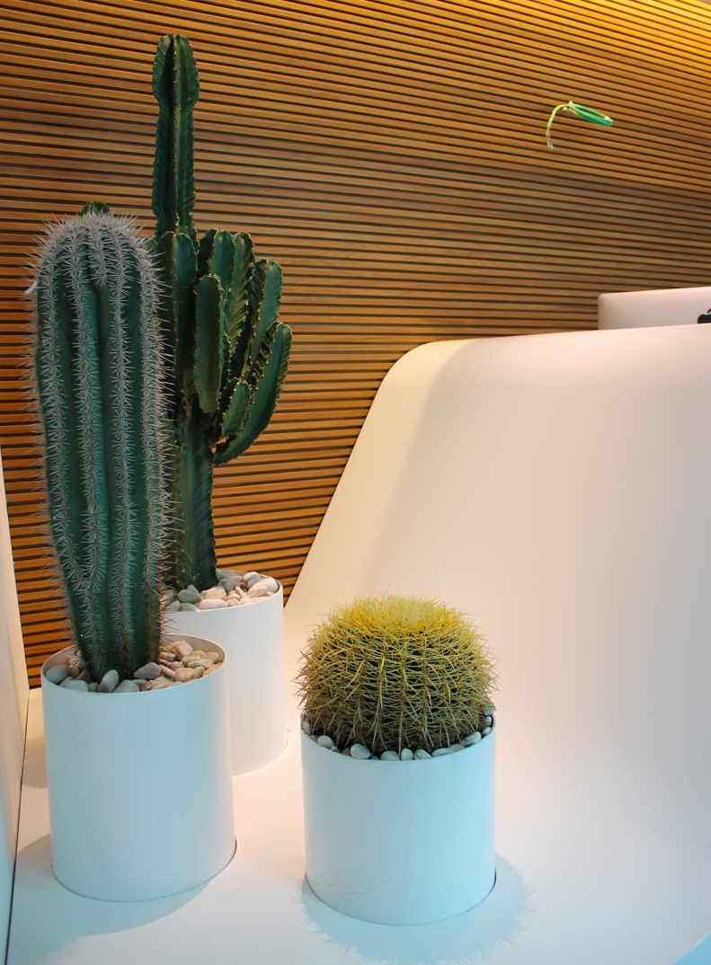 cactus di vario tipo