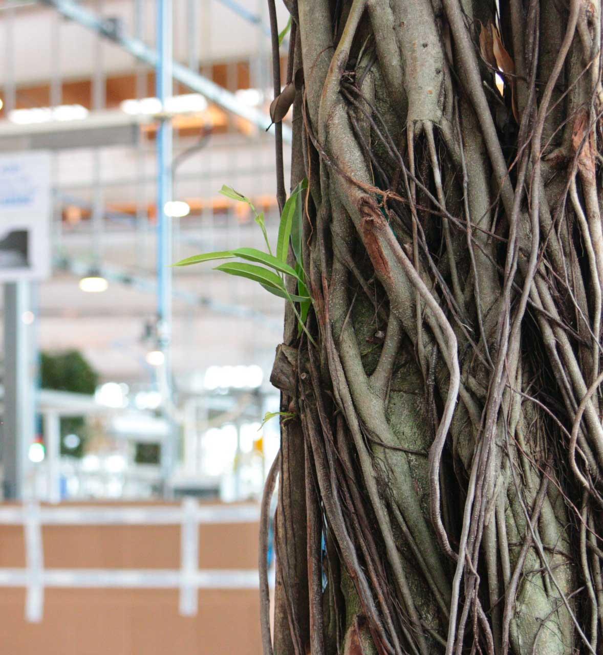 piante esemplari focus rami
