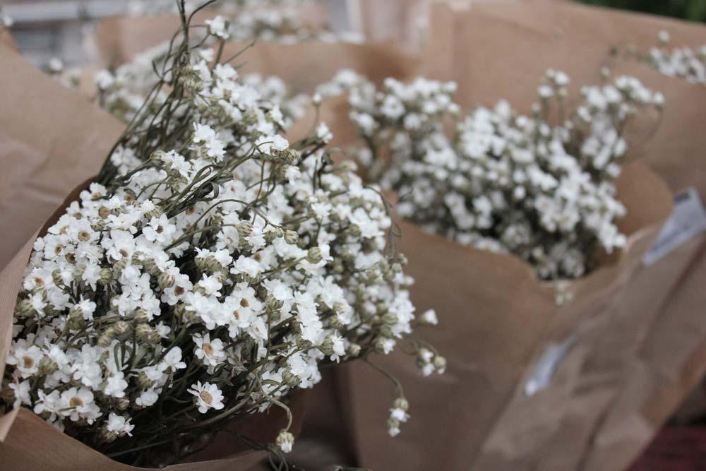 fiori secchi bianchi