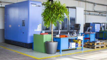 pianta verde in ufficio
