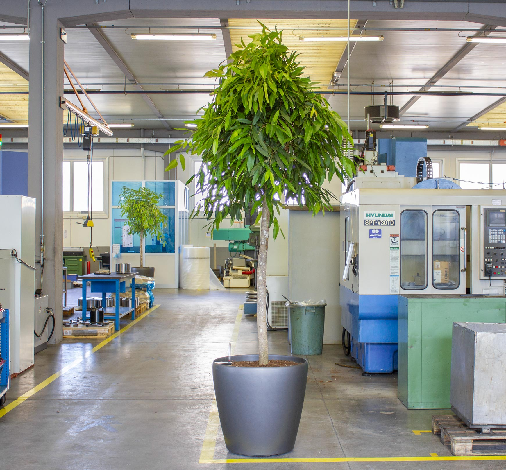 pianta verde dentro un ufficio