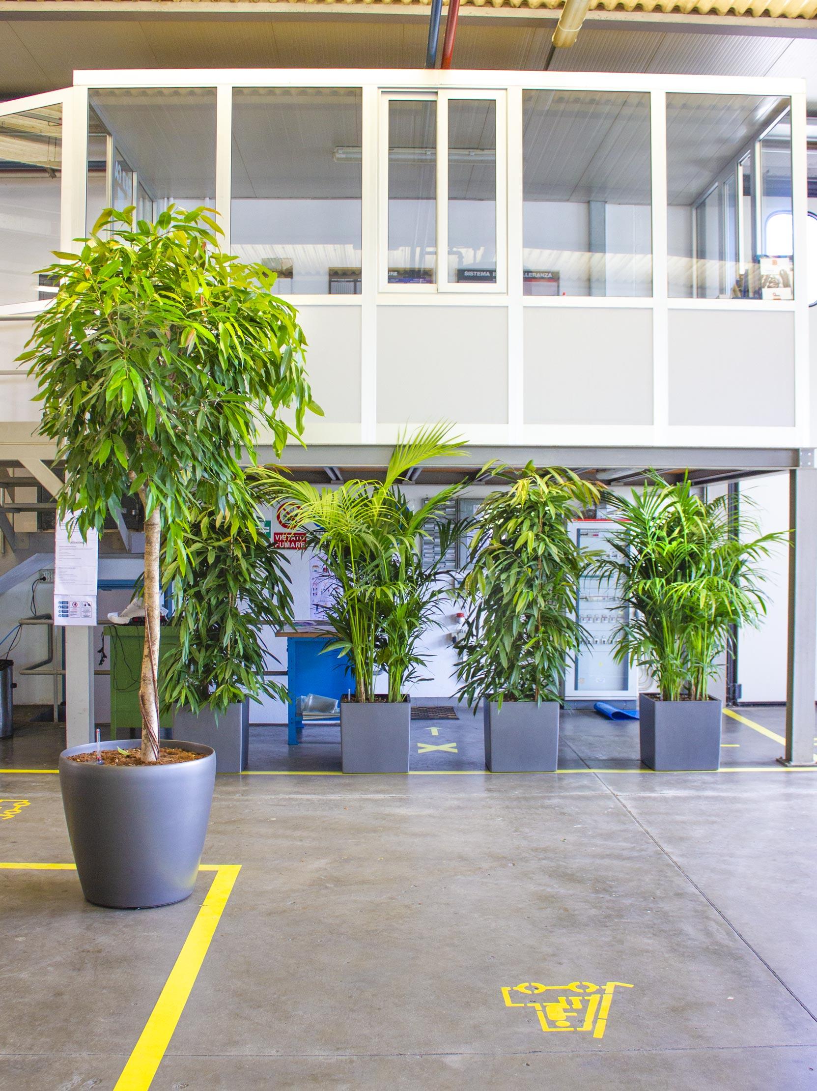 piante negli uffici